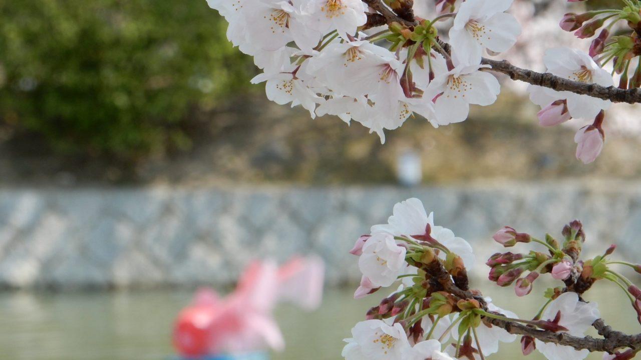 九華公園昼間の花見